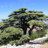 Al Shouf Cedar Nature Reserve